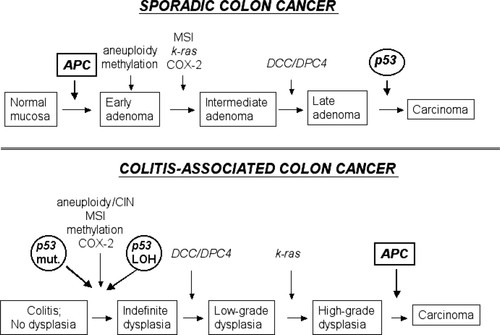 Inflammation And Cancer Iv Colorectal Cancer In Inflammatory Bowel Disease The Role Of Inflammation American Journal Of Physiology Gastrointestinal And Liver Physiology