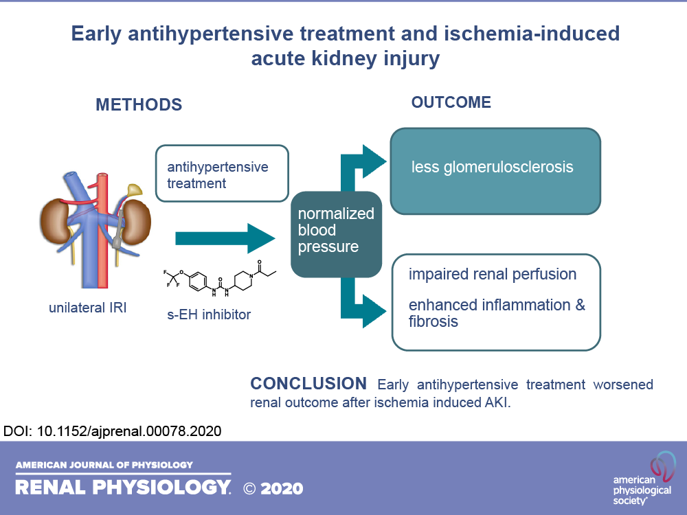 Early Antihypertensive Treatment And Ischemia Induced Acute Kidney Injury American Journal Of Physiology Renal Physiology