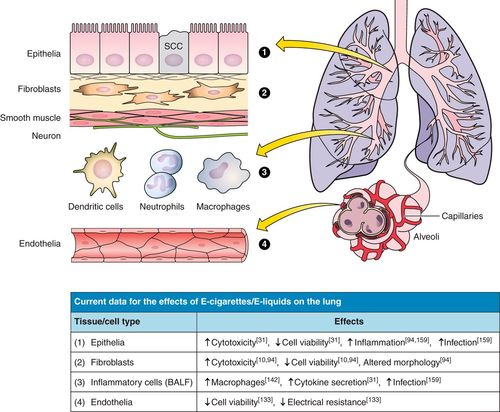 Will chronic e-cigarette use cause lung disease? | American Journal of Physiology-Lung Cellular and Molecular Physiology